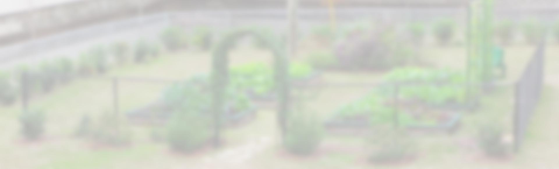 tsms_garden