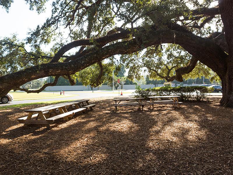 Big Tree - Seating Area
